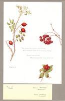 Rosa sp. ; Solanum dulcamara ; Cornus canadensis