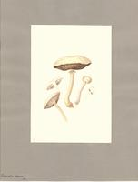 Pholiota praecox