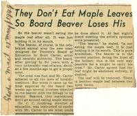 They Don't Eat Maple Leaves So Board Beaver Loses His